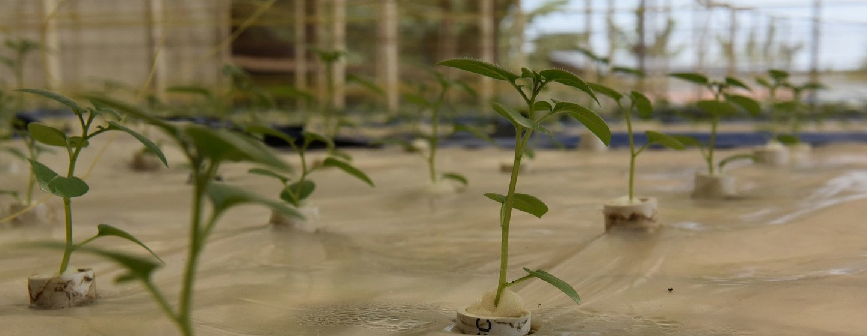 Fida defende promoção de sistemas alimentares como o motor de crescimento do continente africano