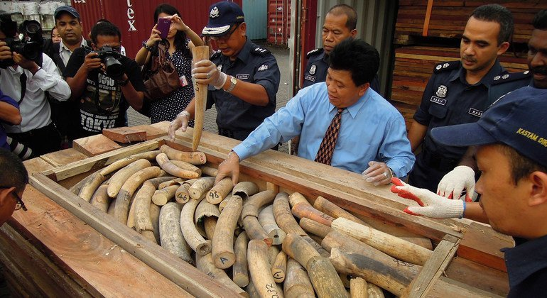 FROM THE FIELD: Taming the illegal wildlife trafficking trade