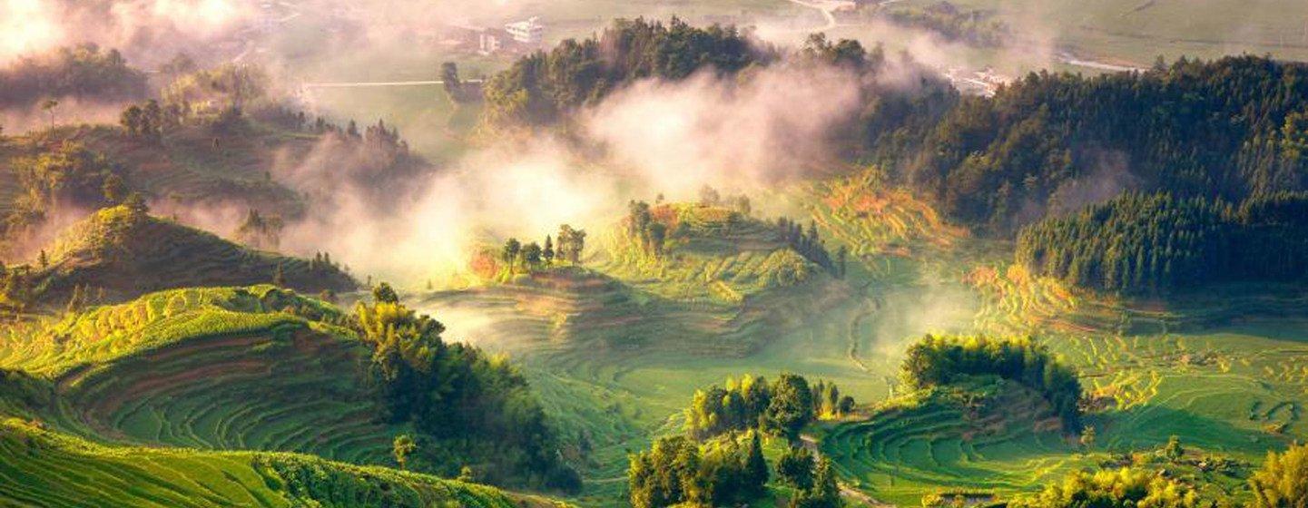 Manejo florestal sustentável também é considerado um meio para construir economias e sociedades resilientes