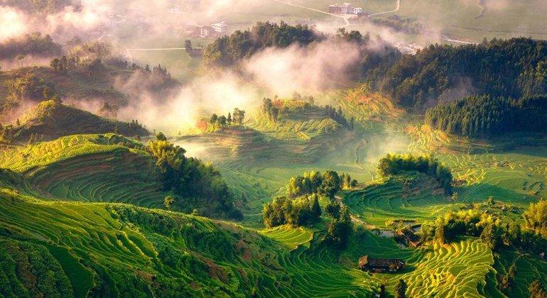 نحو 1.6 مليار شخص حول العالم يعتمدون على الغابات كمصدر للطعام والمأوى والطاقة والدواء والدخل.