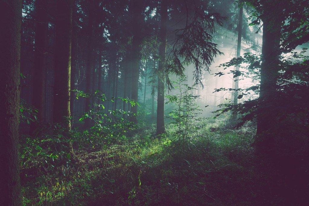 La lumière du soleil traverse une forêt en Allemagne.