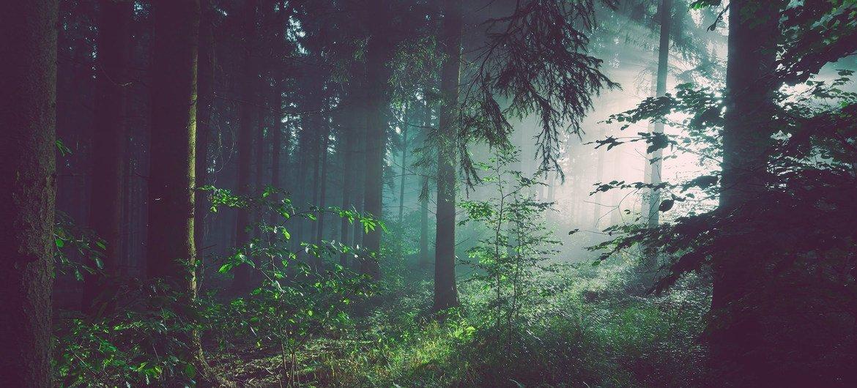 阳光洒落在德国境内的一处森林中。