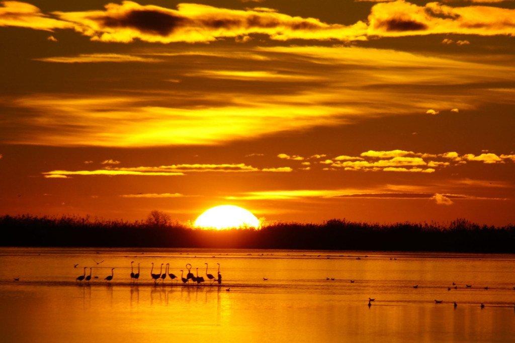 西班牙加泰罗尼亚地区埃布罗三角洲的日出。