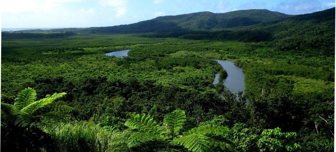 The Nakama River runs through a mangrove forest on Iriomote Island in Japan.