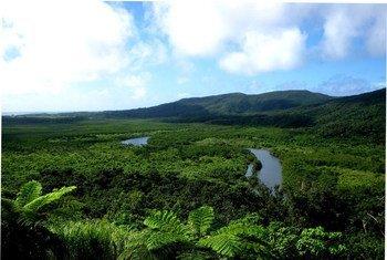 Floresta de mangue na Ilha Iriomote, no Japão