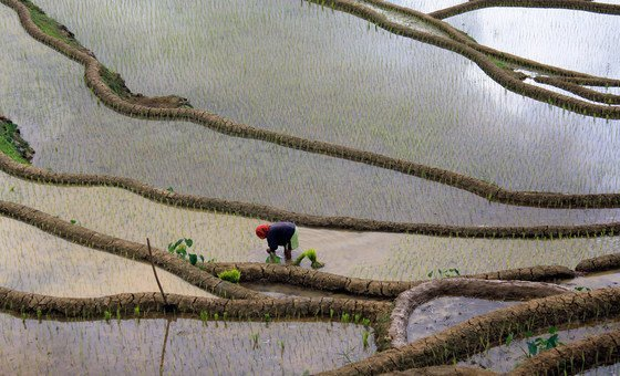 Cultivating crops similar  rice, arsenic  pictured present  successful  the Philippines, requires a ample  magnitude  of caller  h2o  and has an biology  impact