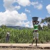Drought in Africa will adversely impact the productivity of major cereal crops, says a report launched by WMO today.