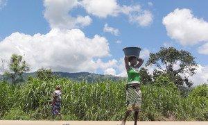 La sécheresse en Afrique a un impact néfaste sur la productiviité agricole, selon l'OMM.