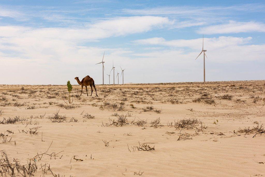 毛里塔尼亚首都努瓦克肖特郊区的风车公园旨在让更多的人获得可再生能源。