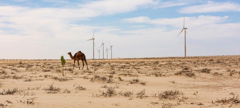 Líderesglobaismarcam o quinto ano da conclusão do acordo climático
