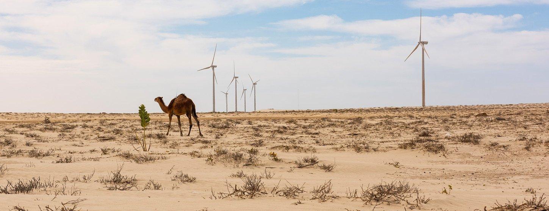 मॉरिटेनिया में एक पवन चक्की पार्क का दृश्य जिसके ज़रिए लोगों को नवीकरणीय ऊर्जा स्रोतों को बढ़ावा दिया जा रहा है.