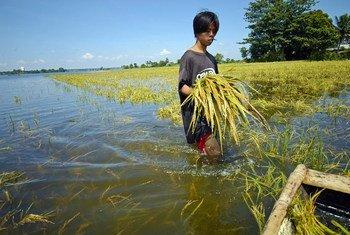 Un agricultor en Filipinas revisa sus cultivos después de una inundación. El cambio climático traerá más fenómenos como este.