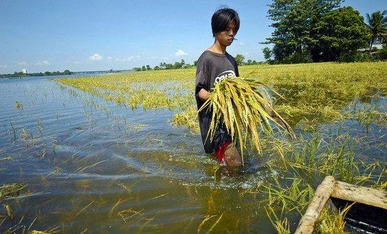 Proteção e restauração de ecossistemasofereceuma oportunidade para mitigar as mudanças climáticas