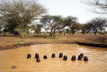 Meninos brincam em Kaya, no Burkina Fasso. Acesso a água potável também está caindo na região.