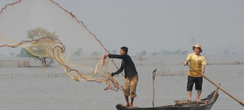 कम्बोडिया में मछली पालन आजाविका का एक प्रमुख स्रोत रहा है.