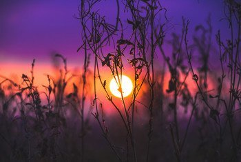 Sunset over a field in the English countryside.
