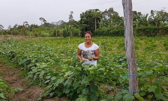La agricultura es una parte importante de la economía de Surinam.