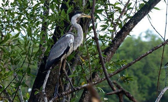 El 93% de Surinam está cubierto por bosques con una gran riqueza biológica.