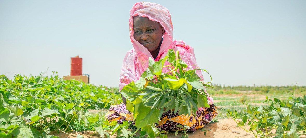 سيّدة في مالي تعمل في حديقة تابعة للمنطقة السكنية وهي جزء من بناء المشاريع التي ينفذها برنامج الأغذية العالمي.