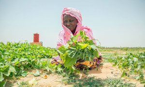A woman in Mali takes care of a community garden which is part of the World Food Programme's capacity building project.