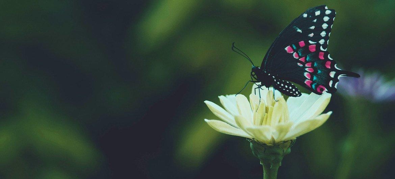 В ООН призывают защитить биоразнообразие планеты.
