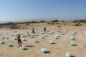 في أبين في اليمن، تتشرد الأسر بسبب انعدام الأمن، وتجمع حزمات النظافة الأساسية وفي الوقت نفسه تمارس التباعد الاجتماعي.