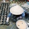 वियतनाम में एक महिला पर्यावरण अनुकूल जैव-ईंधन सामग्री तैयार कर रही है.