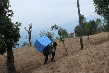 Ram Dawadi, mhudumu wa afya katika kituo cha afya huko Gorkha nchini Nepal akiwa amebeba chanjo za COVID-19 aina ya AstraZeneca akipeleka ili wahudumu wa afya wapatiwe dozi ya pili.