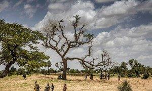 Jusqu'à 65% des terres productives sont dégradées, tandis que la désertification touche 45% des terres en Afrique.