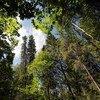 К 2030 году в России планируют значительно сократить выбросы парниковых газов - с учетом роста экономики и увеличения поглощающей способности лесов