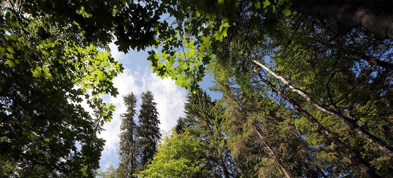 La réserve forestière de Kologrivsky, dans la région de Kostroma en Russie, a été ajoutée à la liste des réserves de biosphère de l'UNESCO.