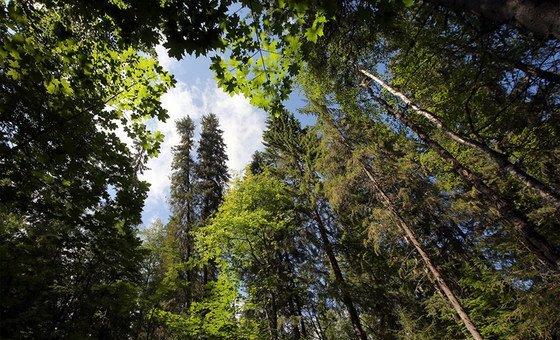"""Em mensagem sobre o dia, Guterres disse que o planeta """"está num ponto crítico"""" e   apela as pessoas a fazerem as pazes com a natureza"""