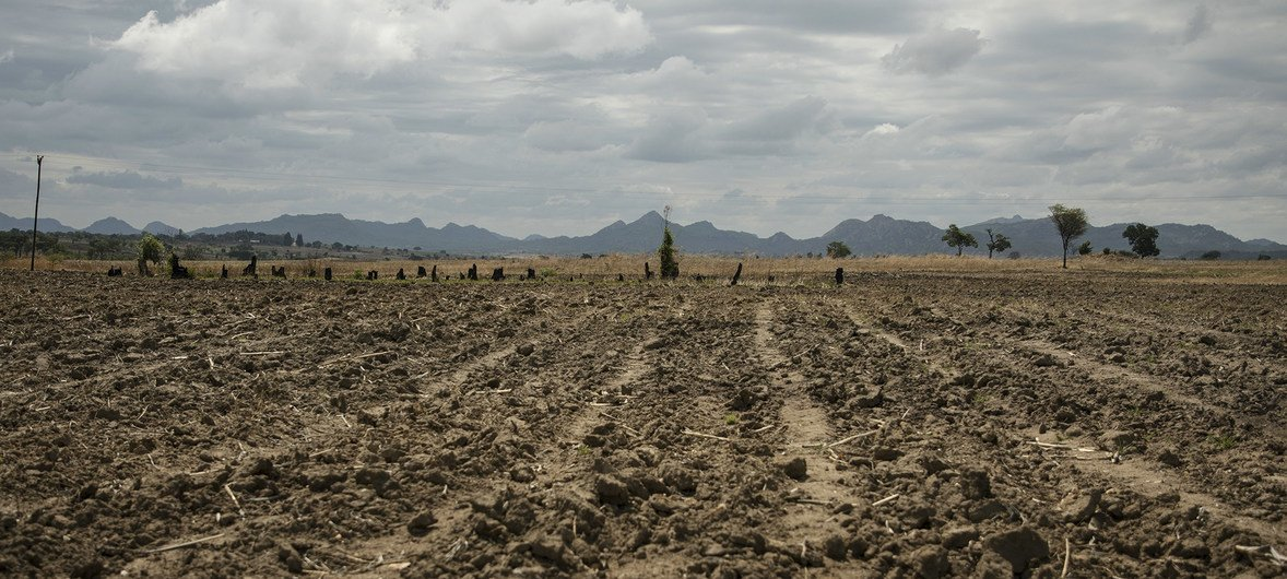 Millions of Zimbabweans have been pushed into hunger by prolonged drought and an economic crisis.