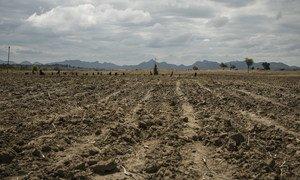 الملايين من سكان زمبابوي دُفعوا إلى حافة المجاعة بسبب الجفاف الذي طال أمده والأزمة الاقتصادية التي لحقت بالبلاد.