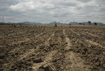 В результате затяжной засухи миллионы жителей Зимбабве оказались на грани голода.