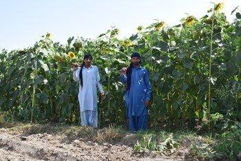 पाकिस्तान में नाइट्रोजन प्रबन्धन से, प्राकृतिक स्थानों को पुनर्जीवित करने की कोशिश.
