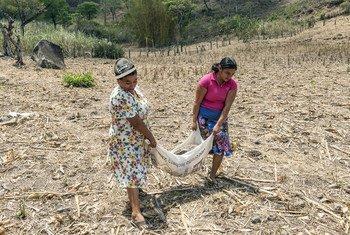 在萨尔瓦多,农民正在接受有关土壤保护的培训以改善作物产量。