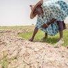 Фермеры в Мали сталкиваются с большими трудностями в связи с засухами и наводнениями.