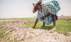 في مالي، استمرار الفيضانات والجفاف جعل الحياة صعبة بالنسبة للمزارعين.