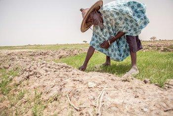 No Mali, enchentes e secas recorrentes dificultaram a vida dos agricultores.
