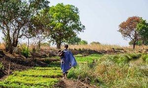 南苏丹近期报告了15例5岁以下儿童感染脊髓灰质炎病例,并已经造成了不可逆转的瘫痪。