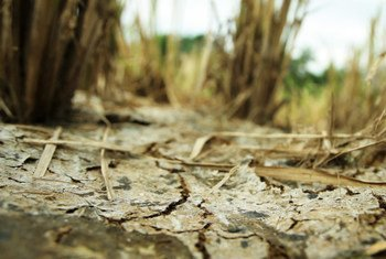 Over-cultivation and the effects of climate change have led to the deterioration of soils in the Philippines' Bukidnon Province. (file)