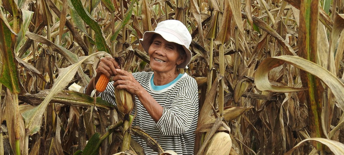 Maize farmers in the Philippines' Bukidnon Province are learning how to cultivate the crop more sustainably. (September 2018)