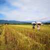 Farmers in the Philippines are learning to adapt to changing climatic conditions and the effects of over-cultivation. (August 2018)