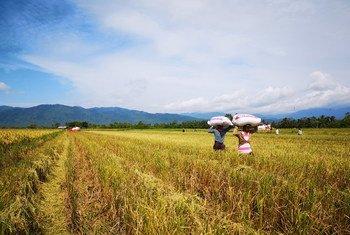 फ़िलीपीन्स के किसान जलवायु आपदा के प्रभावों से बचने के लिए खेतीबाड़ी के नए तरीक़े सीख रहे हैं. (अगस्त 2018)