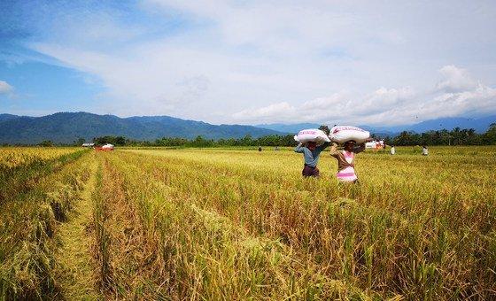Este tipo de alimento também aumenta a produtividade das terras agrícolas.