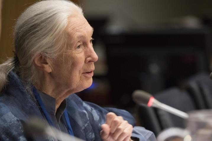 UN Messenger of Peace Jane Goodall addresses a Student Observance of the International Day of Peace (21 September), organized by DPI. 15 September 2017.
