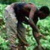 Haïti: la majorité de la population vit sous le seuil de pauvreté