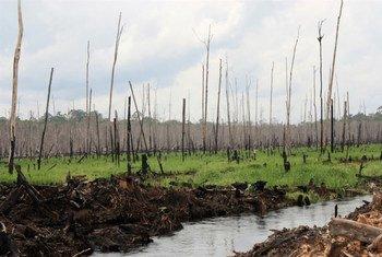 Déforestation en Indonésie.