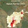 阿富汗鸦片产量全球最高